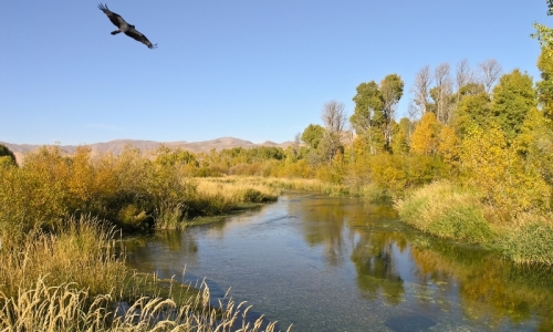 silver creek idaho fly fishing camping boating alltrips