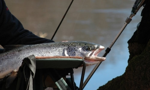 Salmon River Fly Fishing